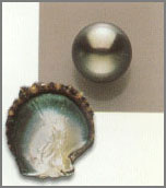 Perle nere dei mari del Sud (Polinesia Francese)
